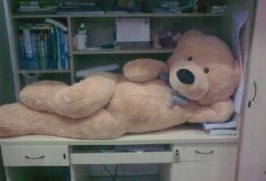 泰迪熊妩媚躺姿邪恶内涵图片赏析