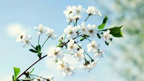 娇美动人的唯美意境花卉图片壁纸