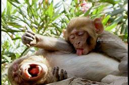 让人目瞪口呆的动物猴子内涵图片