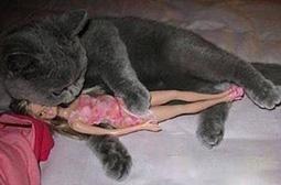 抱美人的邪恶猫咪搞笑内涵图片
