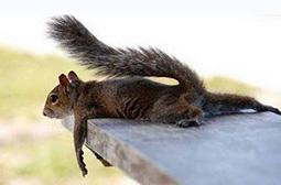 我累了相休息下搞笑动物内涵图片