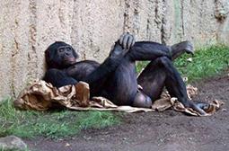 躺姿蛋定的灵长类动物邪恶内涵图