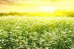 精选暖阳下美丽的植物花海护眼壁纸
