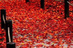 唯美好看的秋天落叶风景壁纸图片