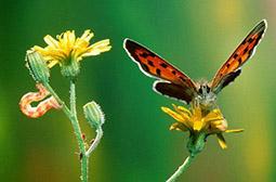 色彩斑斓的蝴蝶高清动物壁纸图片