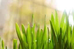 清新养眼植物嫩叶高清绿色桌面壁纸