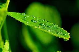 植物绿叶上的露珠高清护眼桌面壁纸
