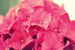 精选唯美静态花卉高清特写桌面壁纸