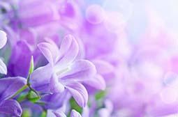 欣赏浪漫唯美紫色花卉高清护眼壁纸