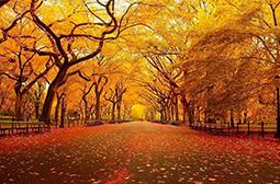 拍摄秋天美丽迷人的自然风景图片