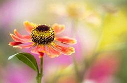 唯美梦幻的植物花卉壁纸图片大全