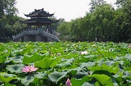 杭州西湖曲院风荷唯美风景图片赏析