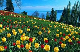 唯美清新的花草风景壁纸大全赏析