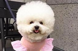 可爱毛茸茸的小狗狗动物高清写真