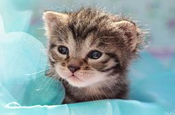 乖巧可爱的小萌猫动物壁纸图片大全