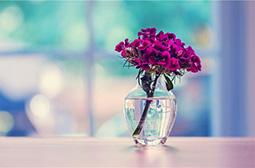 唯美小清新花瓶文艺风意境图片素材