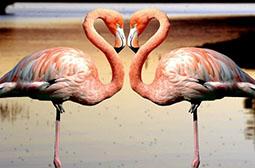 羽色鲜艳动作优雅火烈鸟动物图集