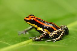 活蹦乱跳的野外动物青蛙高清图集
