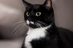 可爱俊俏的猫咪动物高清写真图片