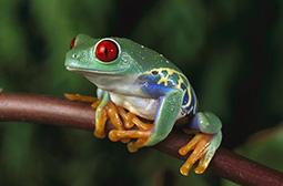 夏天活蹦乱跳的可爱动物青蛙图片