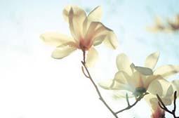 精选唯美有意境的花草植物图片素材