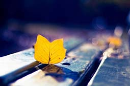 唯美伤感的落叶意境高清图片素材