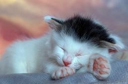 精选可爱动物猫咪最美睡姿图片大全