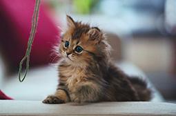 会卖萌可爱的小猫咪高清动物图片