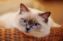 精选调皮可爱动物猫咪高清图片集