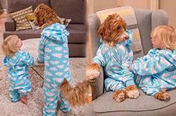 有意思的宠物犬与小孩图片赏析